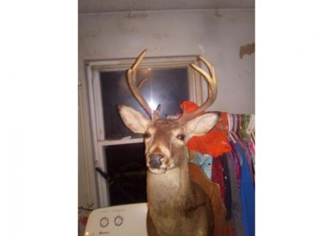 Mounted 10 Point